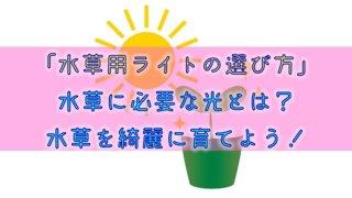 【水草用ライトの選び方】水草に必要な光とは?水草を綺麗に育てよう!