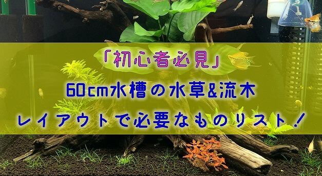 【初心者必見】60cm水槽の水草&流木レイアウトで必要なものリスト!