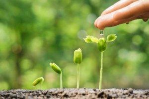 植物の生長の写真