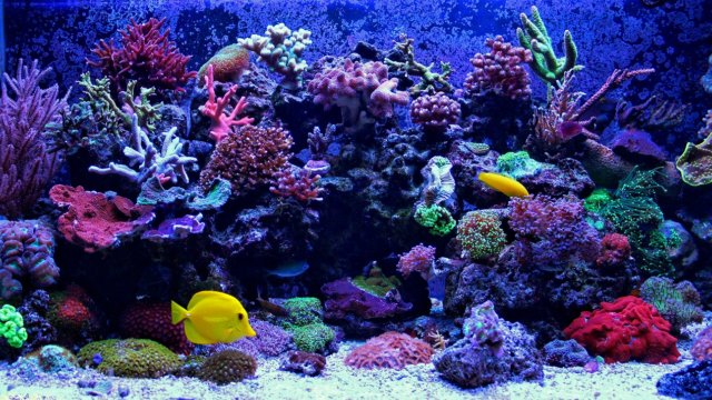 海水アクアリウムの写真