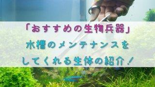 【おすすめの生物兵器】水槽のメンテナンスをしてくれる生体の紹介!