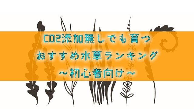 【CO2添加無しでも育つ】おすすめ水草ランキング~初心者向け~