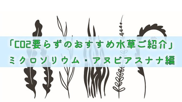 「CO2要らずのおすすめ水草ご紹介」ミクロソリウム・アヌビアスナナ編