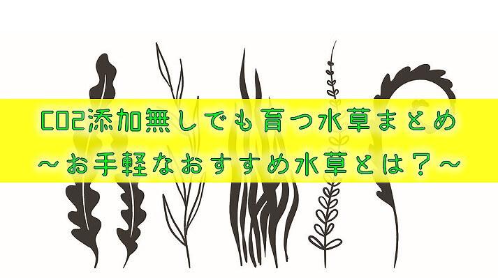 CO2添加無しでも育つ水草まとめ