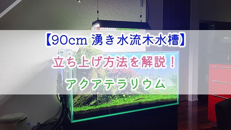 【90cm湧き水流木水槽】立ち上げ方法を解説!アクアテラリウム